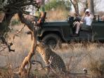 Budget safari in Kruger, South Africa