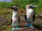 Flexible Galapagos Islands tailor made tour