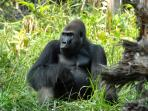 Congo and Central Africa wildlife holiday