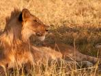 Kenya holiday, wildlife and beaches