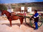 Gozo horse and carriage rides, Malta