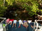Grand Cayman mangrove boat tour