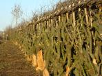 Cotswolds hedgelaying rural skills course, England