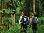 Rainforest expedition in Costa Rica