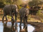 South Africa family safari & cultural holiday