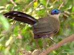 Budget Madagascar bird watching tour