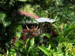 Dominica guest house, Hibiscus Valley Inn