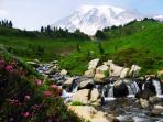 Olympic NP & Mount St Helens walking holiday, America