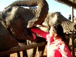 South Africa wildlife volunteering holiday