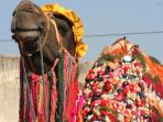 Rajasthan holiday, Christmas and Easter
