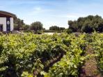 Menorca vineyard and wine tasting day tour, Spain