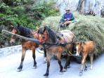 Romania horse riding holiday
