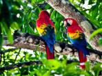 Costa Rica luxury adventure holiday