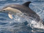 Whale & dolphin conservation in South Africa