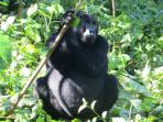 Uganda safari holiday, 12 days