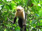 Costa Rica wildlife explorer holiday