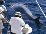 Blue whale watching in the Azores, 4 star accommodation