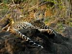 Central India holiday, culture and wildlife