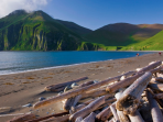 Wildlife cruises to Kamchatka and Chukotka, Russia