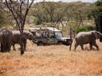 Kenya wildlife holiday