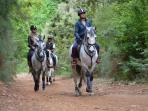 Madeira Island horse riding tours, Portugal