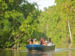 Borneo wildlife holiday, tailor made
