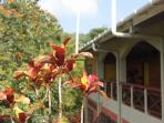 Tobago eco retreat hotel