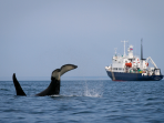 Wildlife cruise, Kamchatka and the North West Pacific