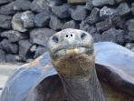 Galapagos cruise, 6 days