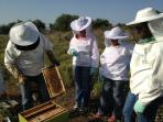 Greece cultural holiday, beekeeping and honey
