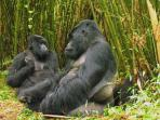 Uganda wildlife family holiday