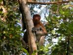 Borneo trekking holiday, the Red Ape Trail