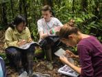 Amazon Rainforest Internship in Peru