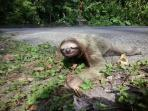 Wildlife conservation in Costa Rica, primate & sloth re-indrodution
