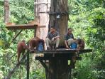 Borneo Safari, volunteer & trek
