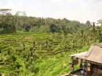 Bali holiday, tailor made