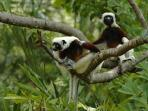 Madagascar wildlife holiday