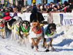 Alaska Northern Lights holiday, activities & Iditarod