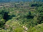 Bali honeymoon, Ubud & Spa Village Resort Tembok