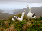 New Zealands Subantarctic Islands photography cruise