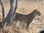 14 day South Africa safari holiday