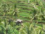 Bali untouched, 12 day tour