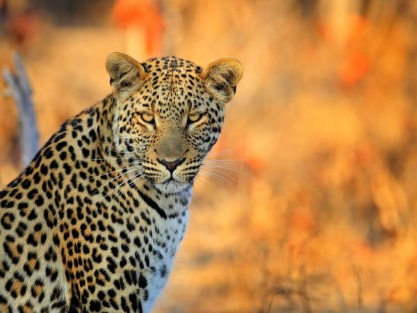 Wildlife conservation holiday in South Africa