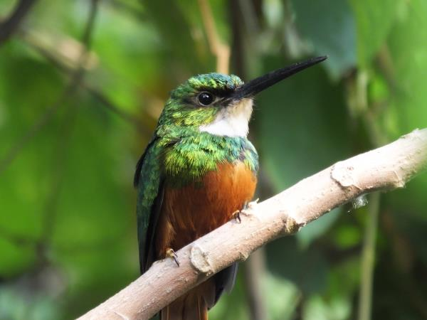 Colombia bird watching tour