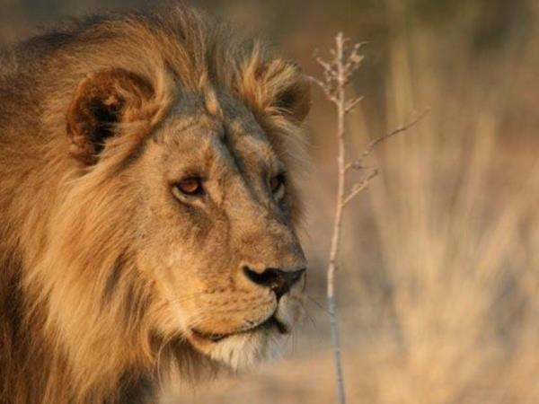 Kruger big game camping safari in South Africa, 3 day