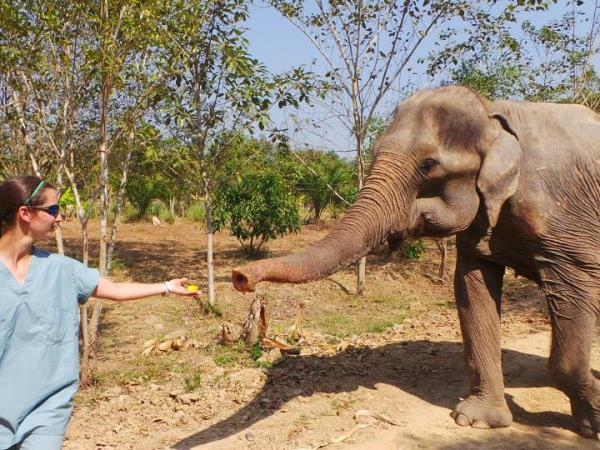 Elephant conservation holiday, Thailand