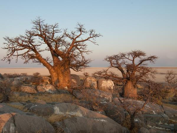 Botswana holiday, tailor made