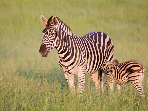 South Africa & Mozambique luxury safari