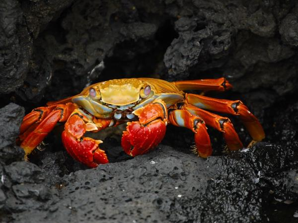 Galapagos and Ecuador small group holiday