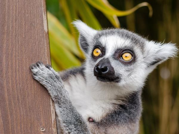 Madagascar small group tour